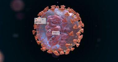 Коронавирус 3D: вируснинг ички кўриниши
