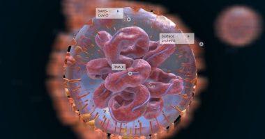 Коронавирус 3D: Ваксина яратилиши