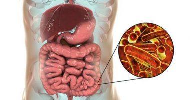 Бактериал дизентерия (шигеллёз, ичбуруғ)
